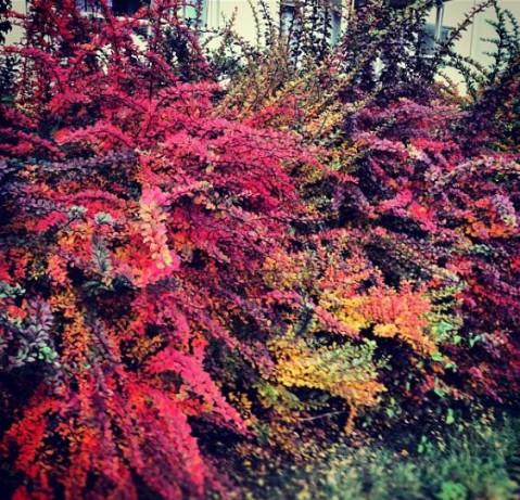 Hagen_høsten2