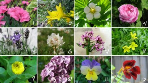 spiselige-blomster-664x374